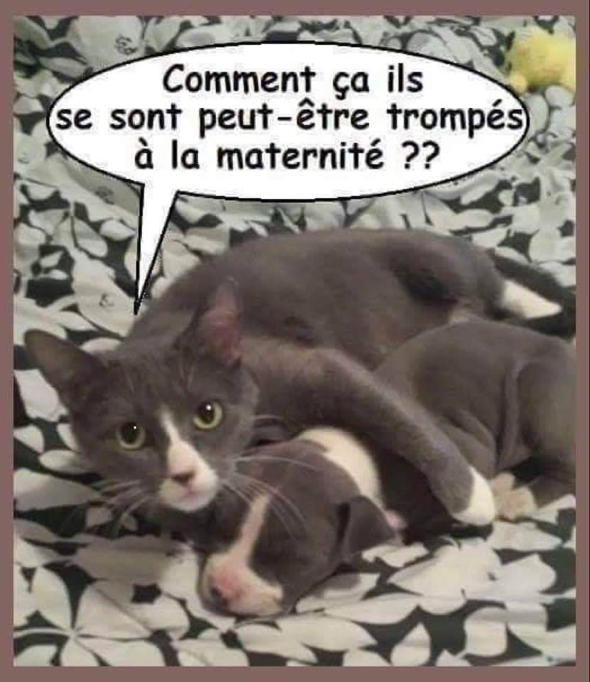 Chats alors !!! Chat-chien2-56f6f2c